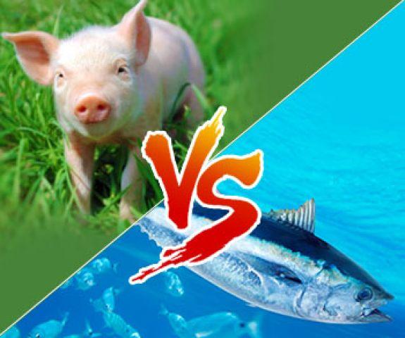 動物性膠原蛋白和魚鱗膠原蛋白之比較