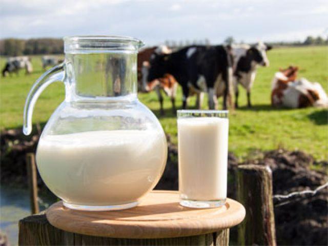 破除鮮乳添加食安謠言 認識鮮乳製造流程